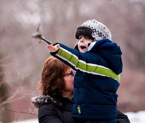 chickadee on child's finger flys away