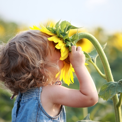 child kisses sunflower