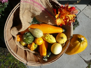 Fall Harvest [Image © Tella Sametz]