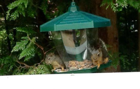 Squirrels at the Bird Feeder